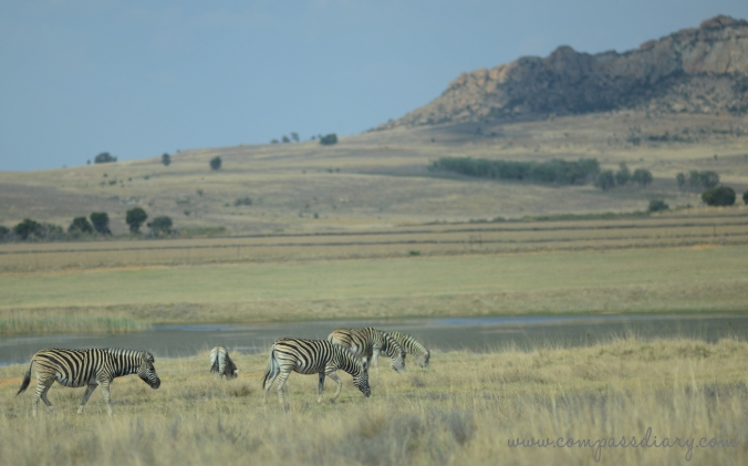 Compass diary travel blog southafrica 4