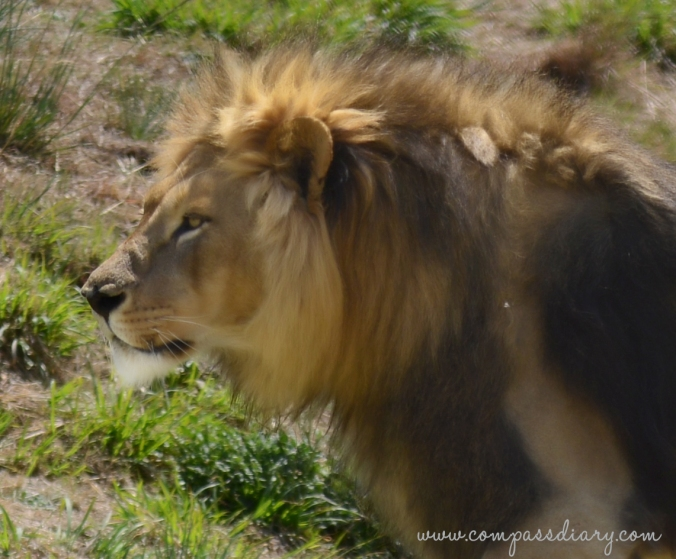 Compass diary travel blog southafrica 6